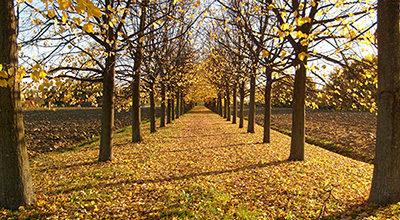 L'autunno è arrivato…anche al Bellavista!
